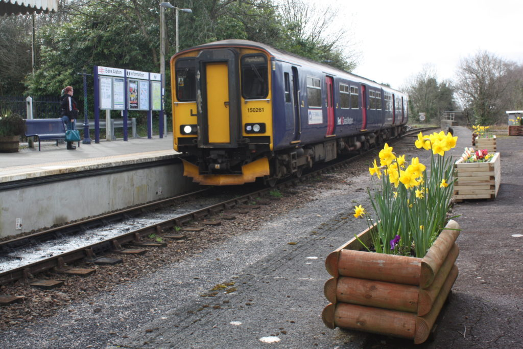 daffs and train at Bere Alston copyright Lesley Strong